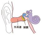 外耳道-1